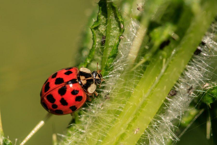 (Italiano) L'agricoltura biologica è l'unica via per sostenibilità. Ma in Italia c'è ancora chi la critica