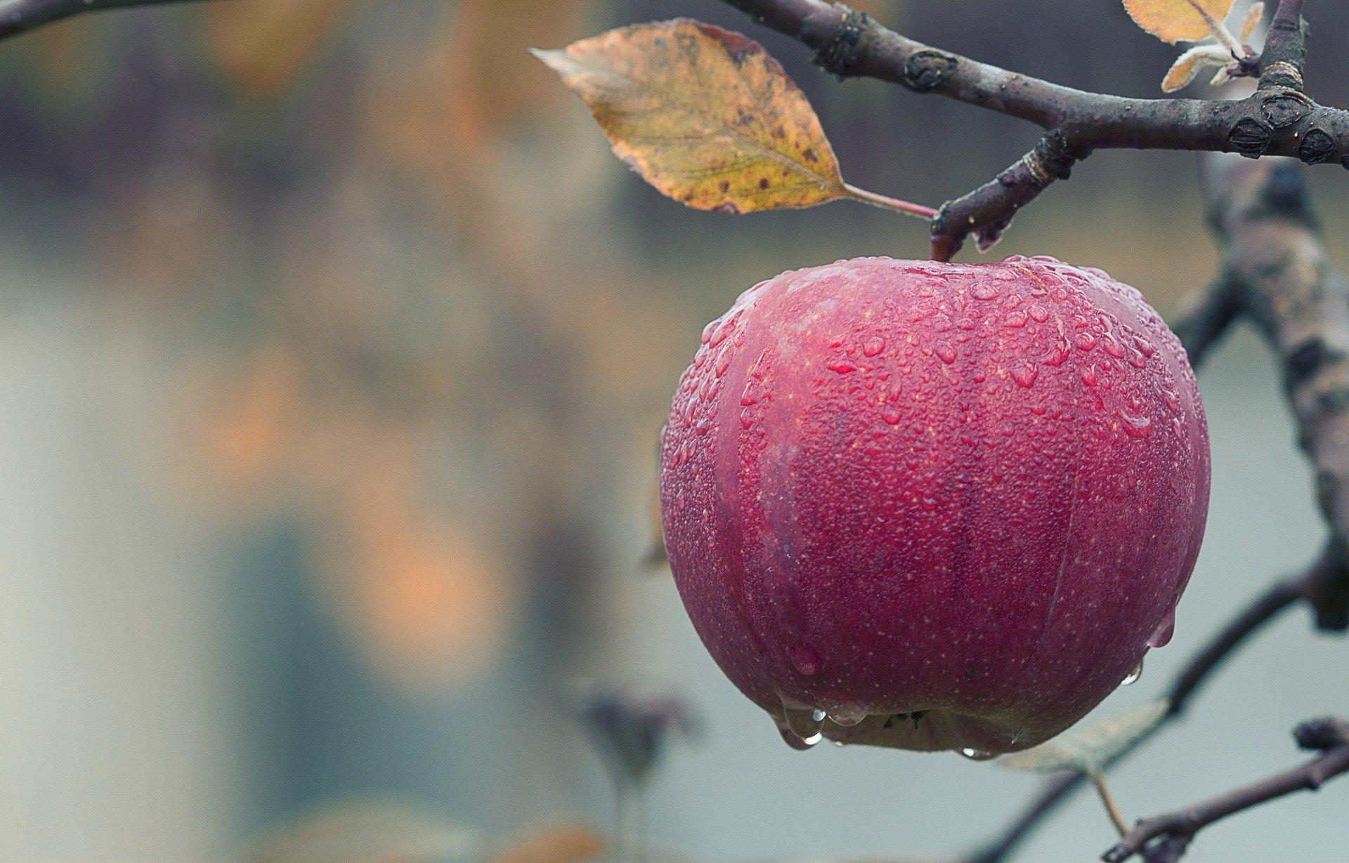 La Decrescita Felice sulla Giornata mondiale dell'Alimentazione