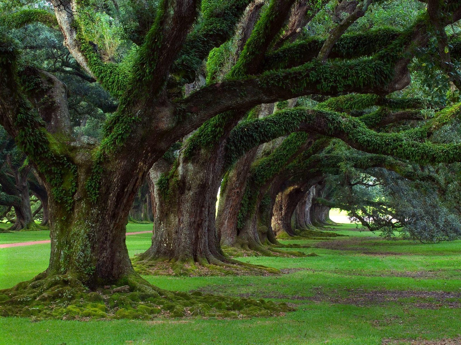 Giardini Da Incubo 2016 il giardino degli alberi dimenticati - mdf